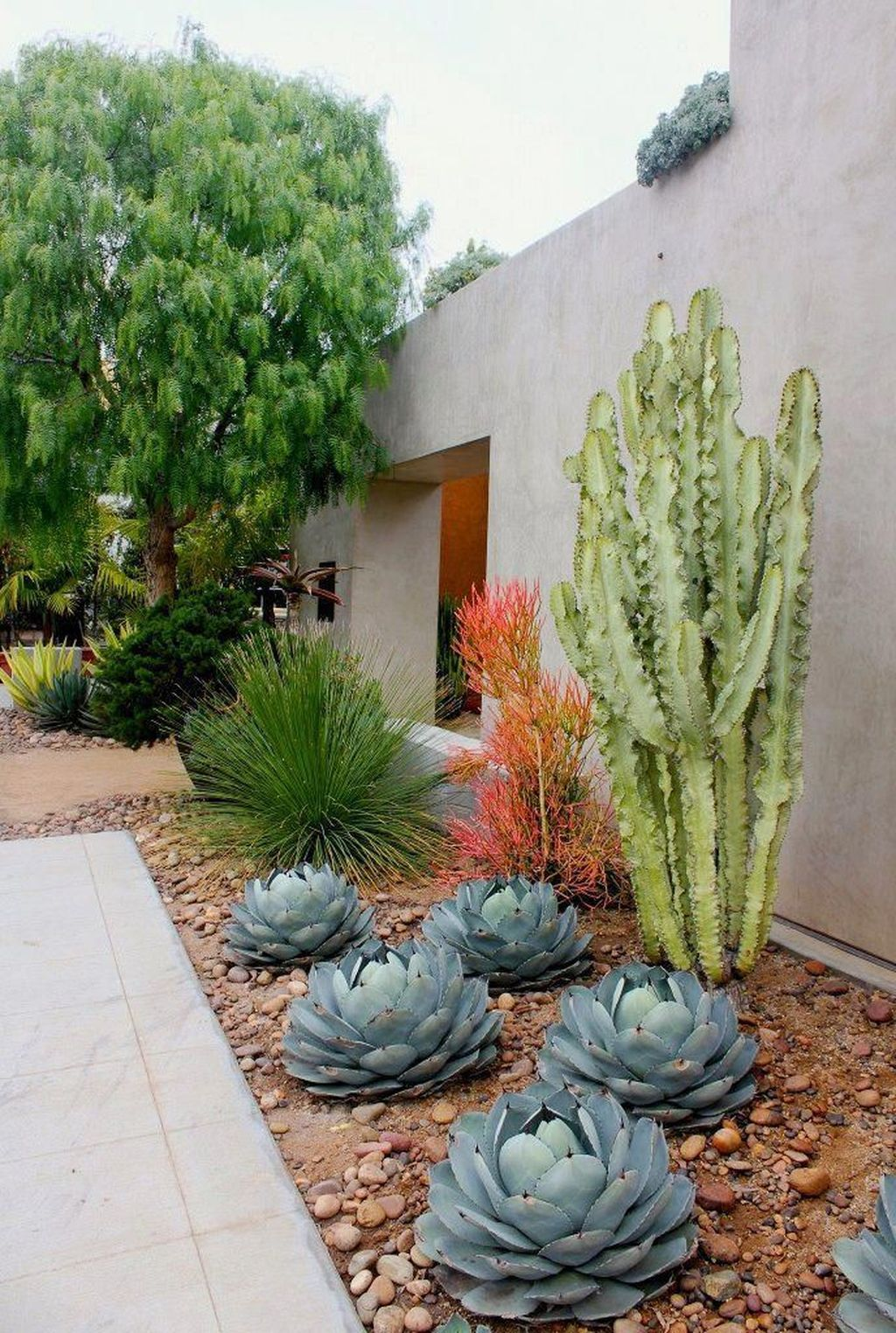 Beautiful Cactus Landscaping Ideas For Your Front Yards Decor 02