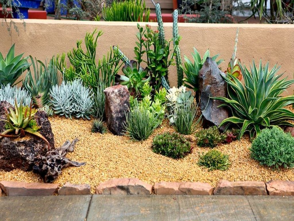 Beautiful Cactus Landscaping Ideas For Your Front Yards Decor 15