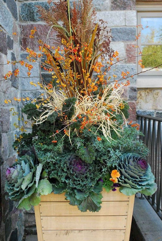 Inspiring Winter Container Gardening Ideas 09