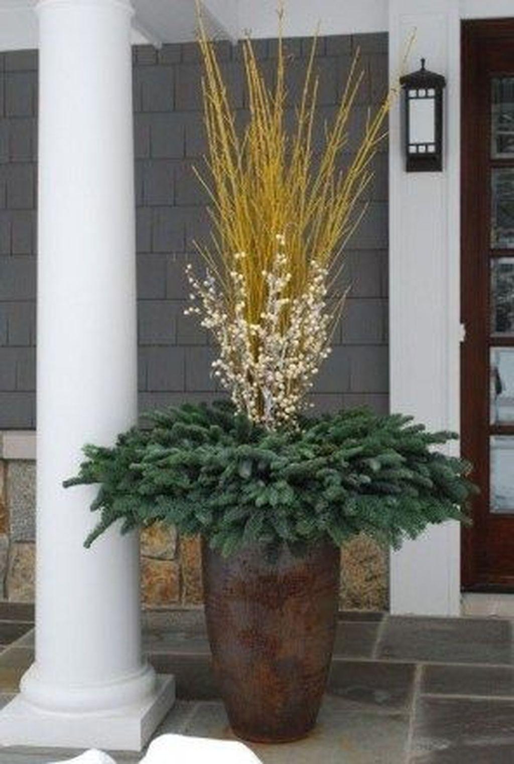 Inspiring Winter Container Gardening Ideas 10