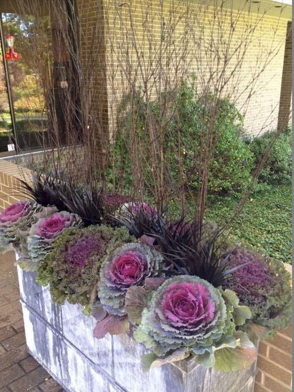 Inspiring Winter Container Gardening Ideas 25