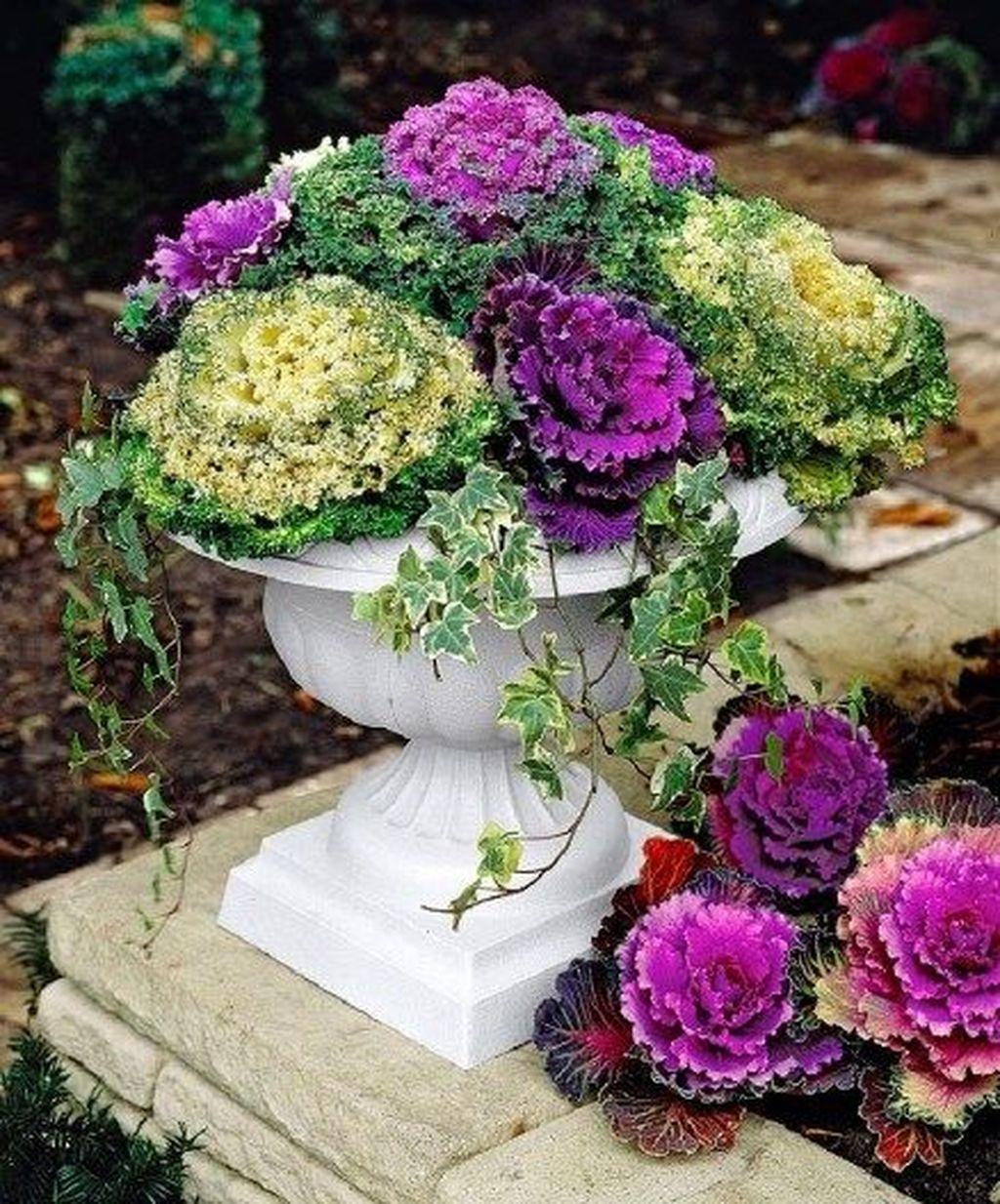 Inspiring Winter Container Gardening Ideas 27