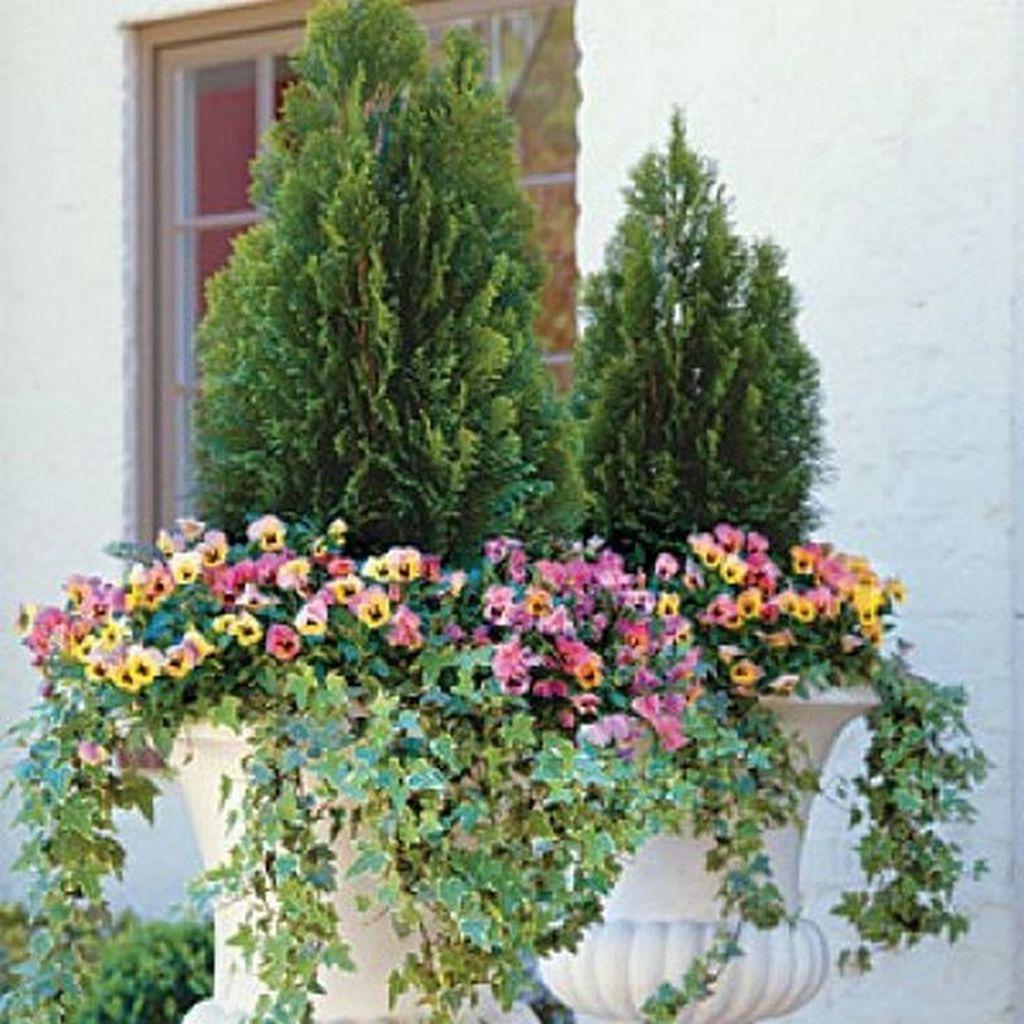 Inspiring Winter Container Gardening Ideas 31