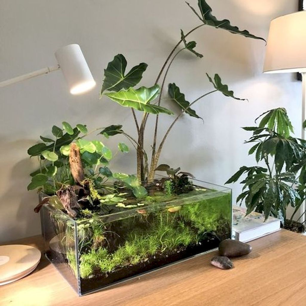 The Best Indoor Garden Ideas To Beautify Your Home 16