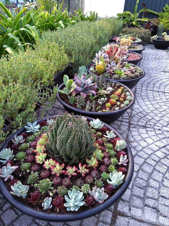 Beautiful Outdoor Succulent Planter Ideas 11