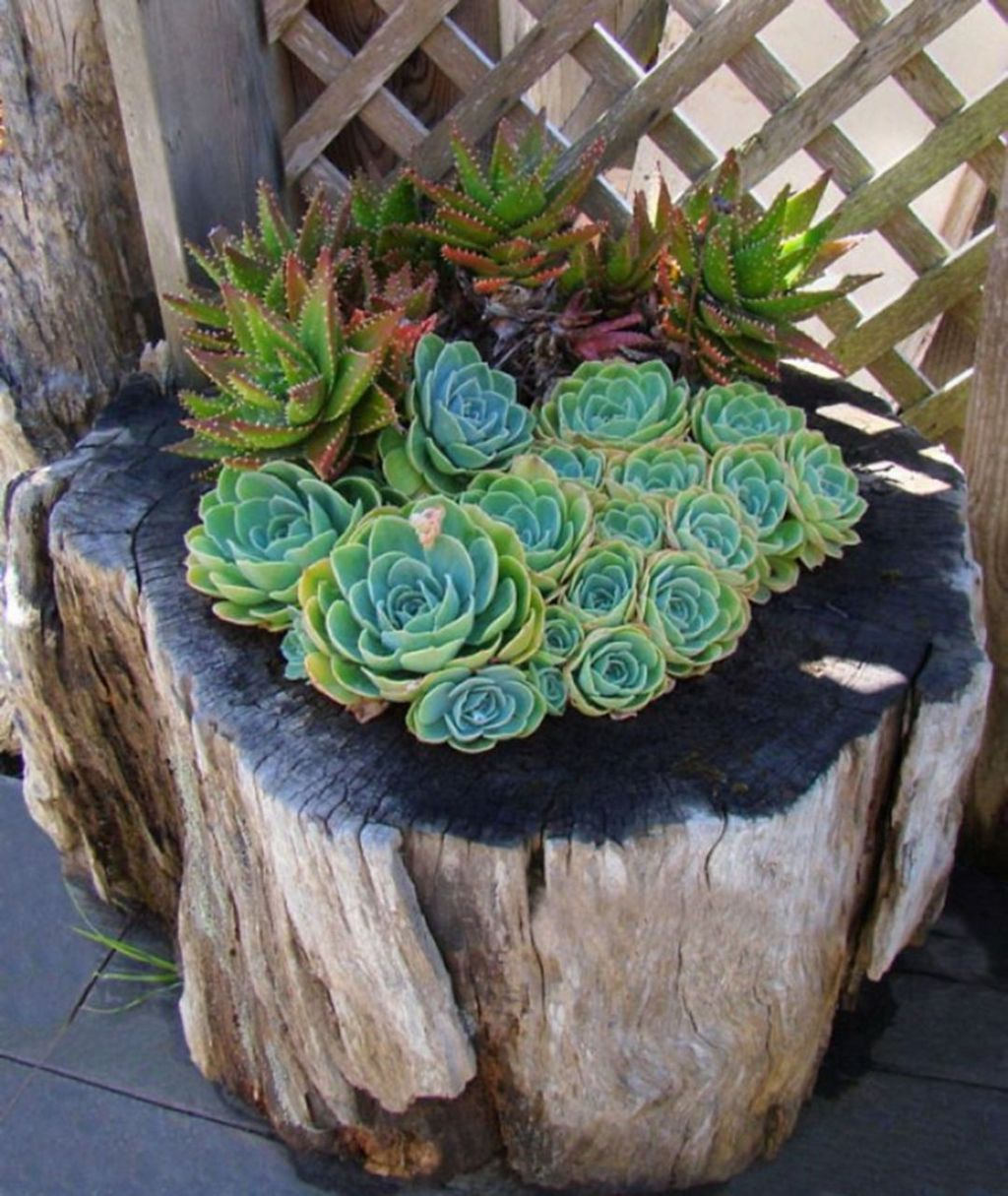Beautiful Outdoor Succulent Planter Ideas 28