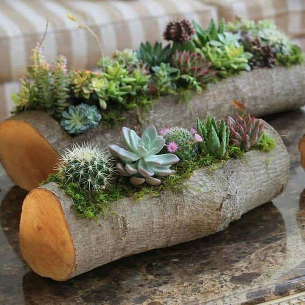 Inspiring Indoor Garden Succulent Ideas 03