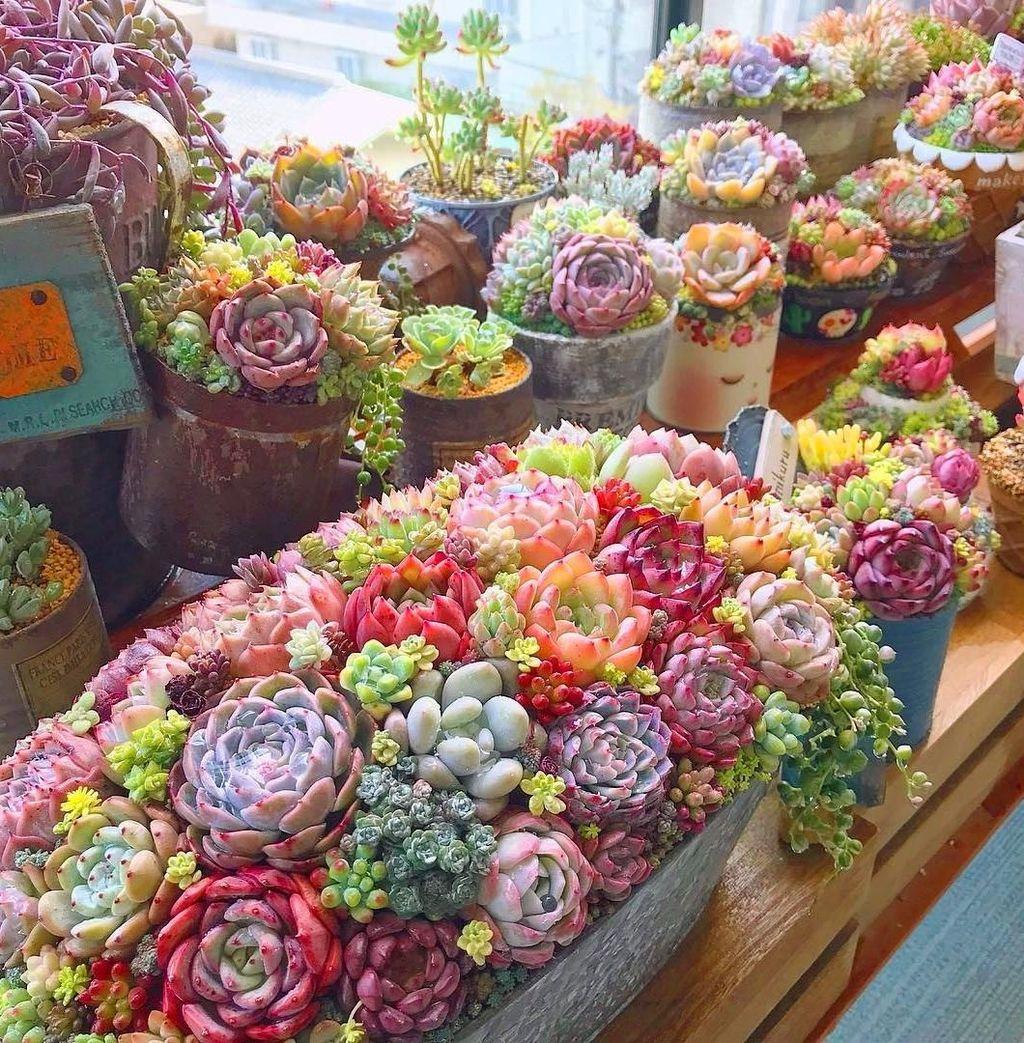 Inspiring Indoor Garden Succulent Ideas 07