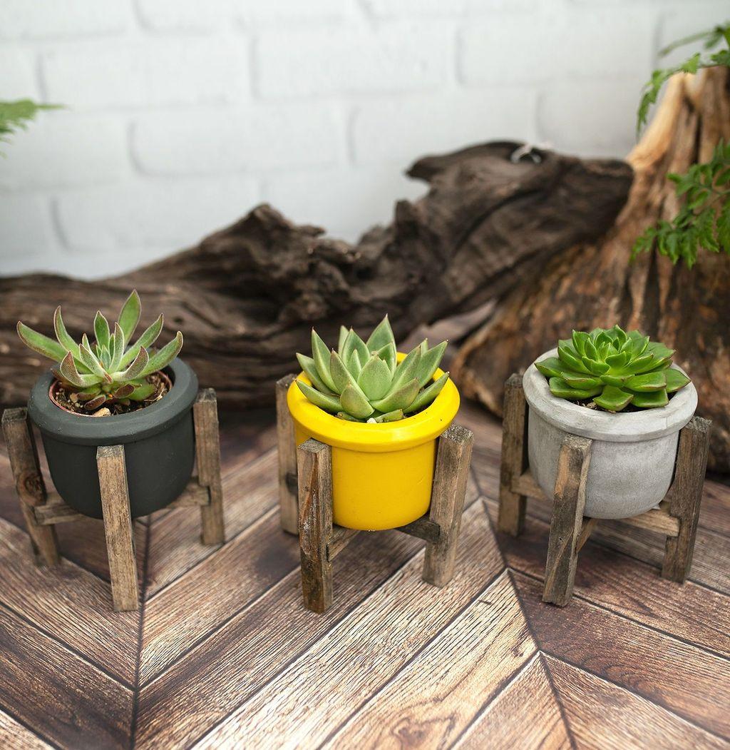 Inspiring Indoor Garden Succulent Ideas 08