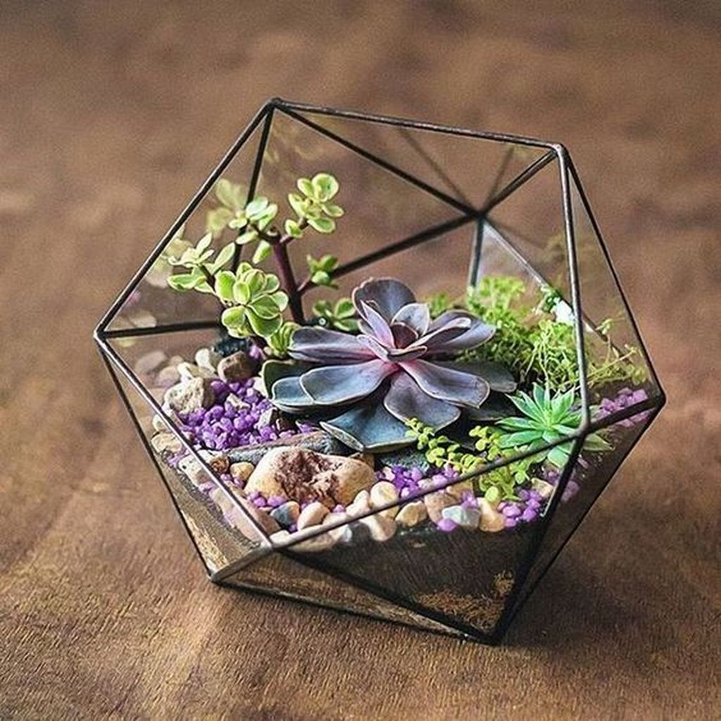 Inspiring Indoor Garden Succulent Ideas 10