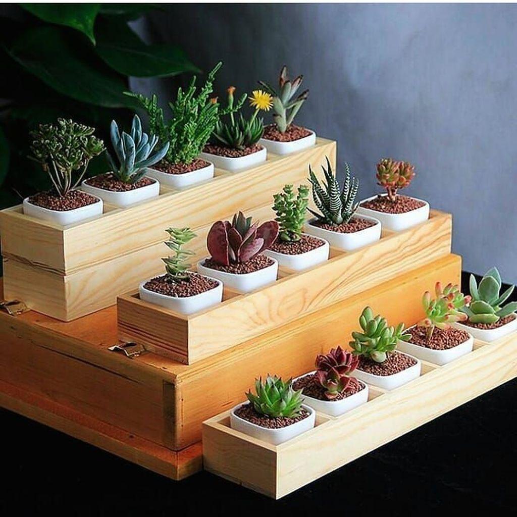 Inspiring Indoor Garden Succulent Ideas 11