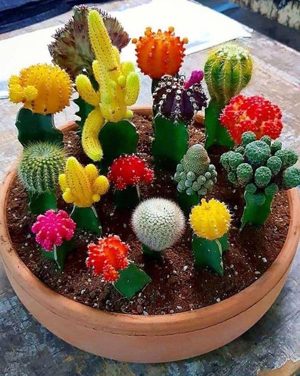Inspiring Indoor Garden Succulent Ideas 13