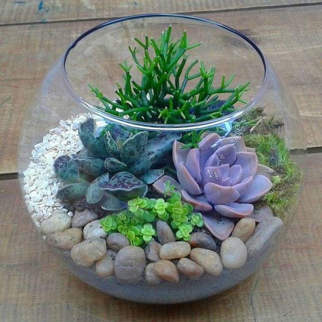 Inspiring Indoor Garden Succulent Ideas 21