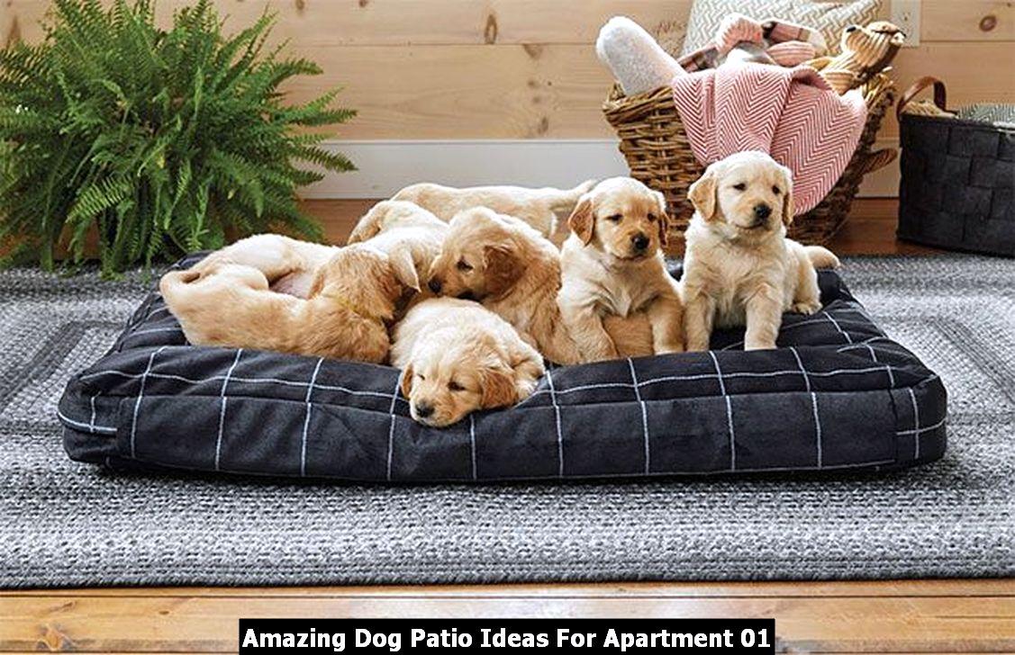 Amazing Dog Patio Ideas For Apartment 01