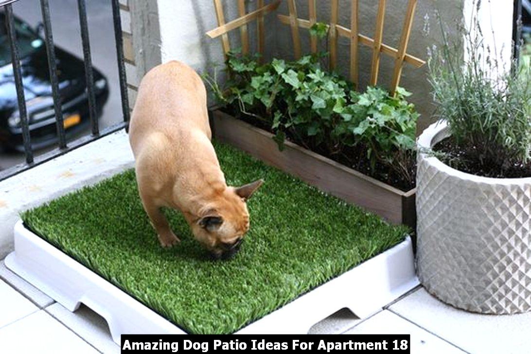 Amazing Dog Patio Ideas For Apartment 18