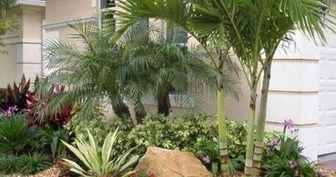 Palm Tree Garden Ideas