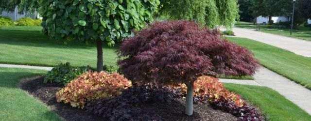 Front Yard Landscaping Trees