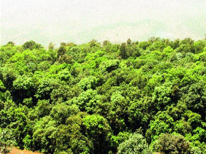 वृक्षरोपणात महाराष्ट्र देशात पहिला, भारतीय वन सर्वेक्षण अहवाल