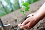रेल्वेने लावली तेरा लाख झाडे