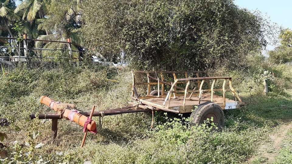 भरधाव टेंम्पोची बैलगाड्यांना धडक, एका उसतोड कामगाराचा मृत्यू