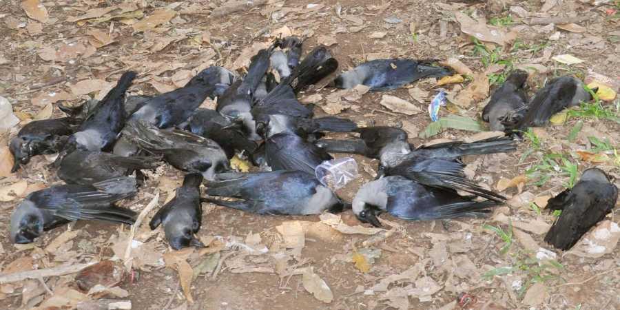 राज्यात एकूण 238 पक्षांचा मृत्यू झाला असून नमूने चाचणीसाठी पाठवले