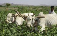 खूशखबर! उद्या केंद्र सरकारतर्फे 19 हजार कोटी थेट शेतकऱ्यांच्या खात्यात होणार जमा