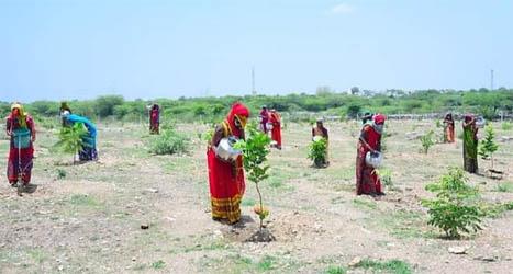 पैसों से पानी खरीद कर भील महिलायें कर रही हैं 1500 पौधों की देखभाल