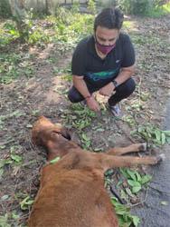 पशुओं को घायल करने वाले वाहन चालकों पर की जाये कार्रवाई : अमन बाली