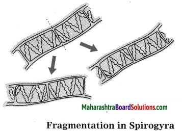 Maharashtra Board Class 10 Science Solutions Part 2 Chapter 2 Life Processes in Living Organisms Part - 2, 13