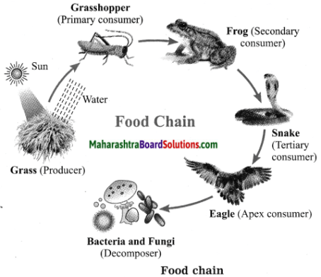 Maharashtra Board Class 10 Science Solutions Part 2 Chapter 4 Environmental management 2
