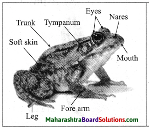 Maharashtra Board Class 10 Science Solutions Part 2 Chapter 6 Animal Classification 10