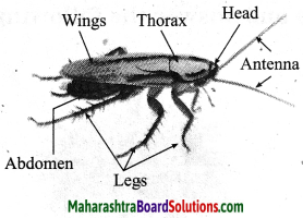 Maharashtra Board Class 10 Science Solutions Part 2 Chapter 6 Animal Classification 15