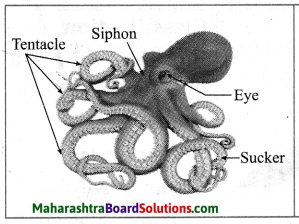 Maharashtra Board Class 10 Science Solutions Part 2 Chapter 6 Animal Classification 7