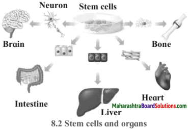 Maharashtra Board Class 10 Science Solutions Part 2 Chapter 8 Cell Biology and Biotechnology 14