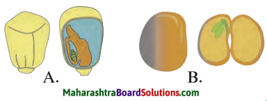 Maharashtra Board Class 7 Science Solutions Chapter 2 Plants Structure and Function 2