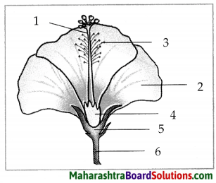 Maharashtra Board Class 7 Science Solutions Chapter 2 Plants Structure and Function 9