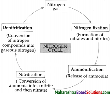 Maharashtra Board Class 9 Science Solutions Chapter 7 Energy Flow in an Ecosystem 4