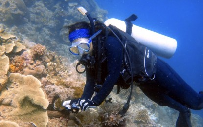 Over 200 divers join underwater cleanup drive in Lapu-Lapu