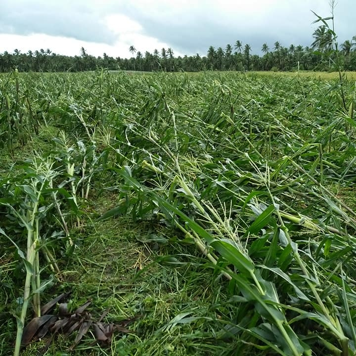Rolly' infra, agri damage over P14-B: NDRRMC