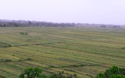 Damage to agriculture reaches over P969-M due to 'Ulysses': DA