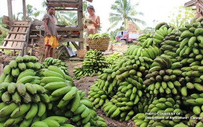 Struggling banana industry seeks lower fees, fewer restrictions