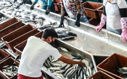 Fish supply up again after week of decline due to typhoon