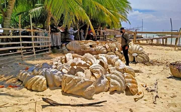 Joint law enforcers seize humongous giant clamshell haul in Palawan