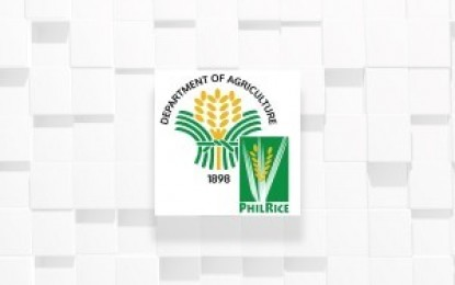 Rice technical workers train to fight fall armyworm infestation