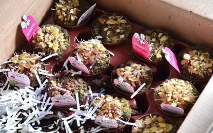 BOC seizes 276 imported carnivorous plants in Pasay warehouse