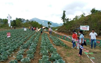 P19-M greenhouses in Antique town ready in Sept