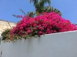 どっかの庭の花