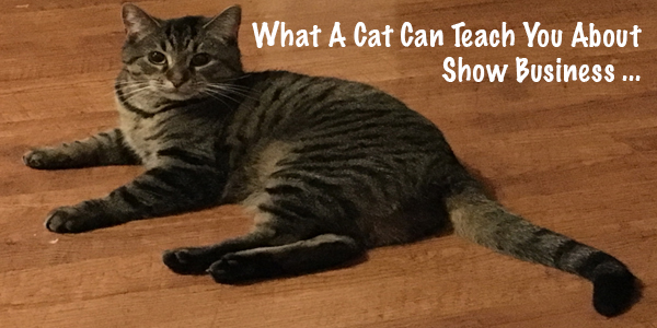What A Cat Can Teach You About Show Business (Part 2)