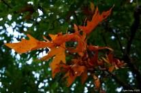 Fall - Sonbahar