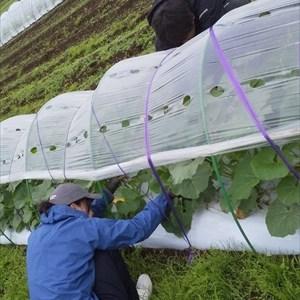 2019年04月27日 福姫会 【株式会社みうら鈴木園】援農ボランティア